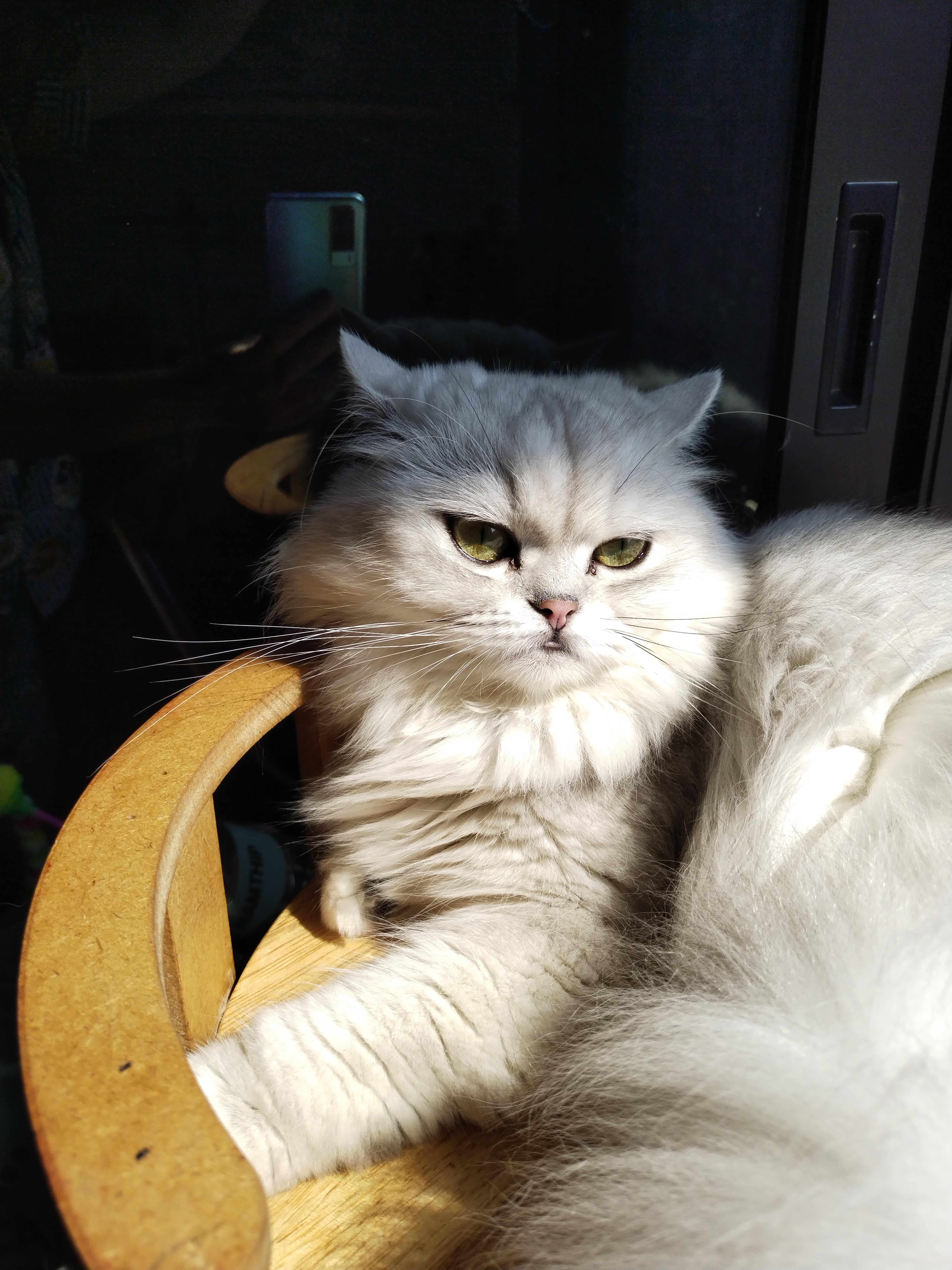 ถ่ายภาพแมว 48MP