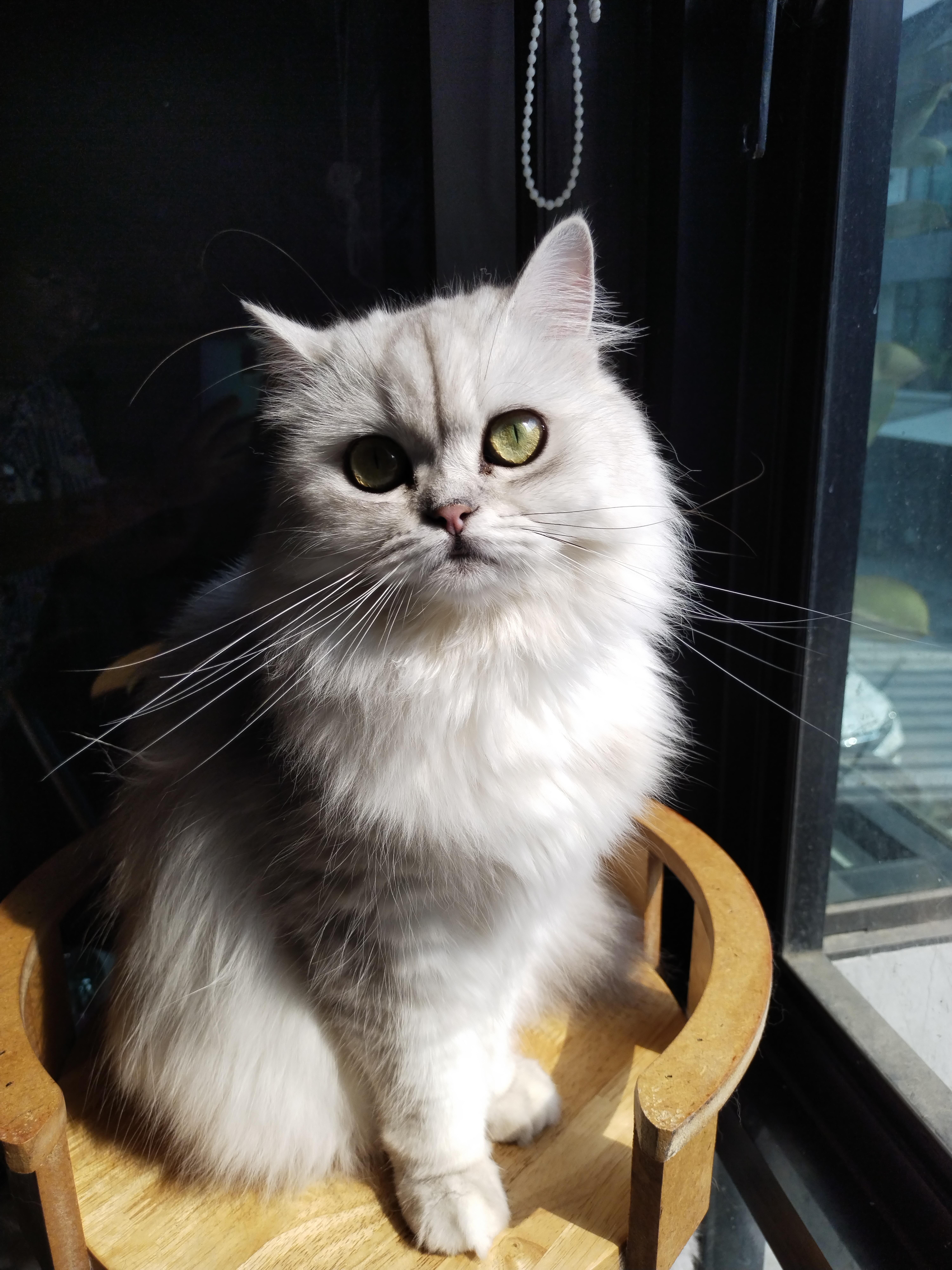 ภาพแมว 48MP