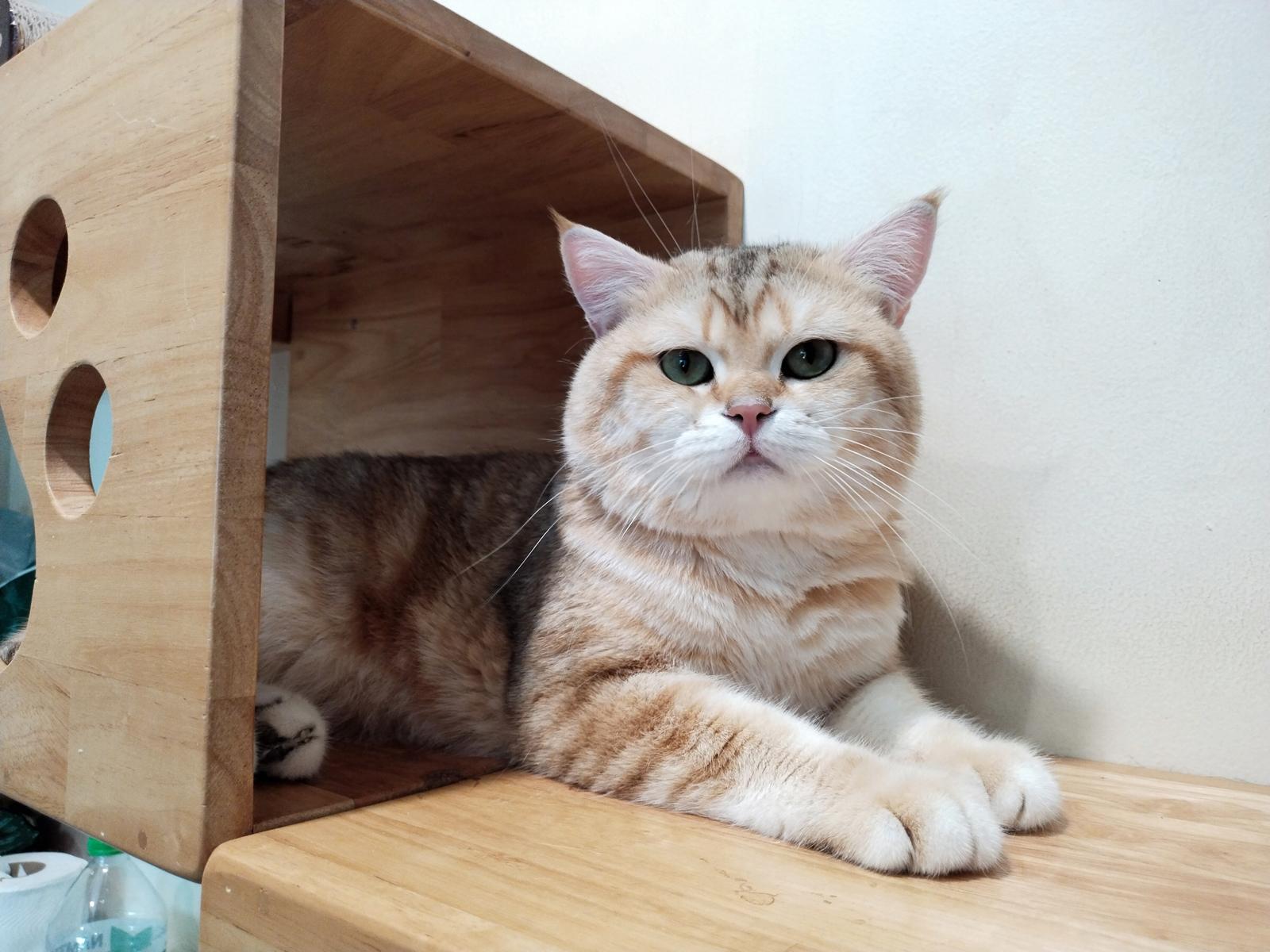 ภาพแมวในบ้าน ถ่ายด้วย Vivo Y31